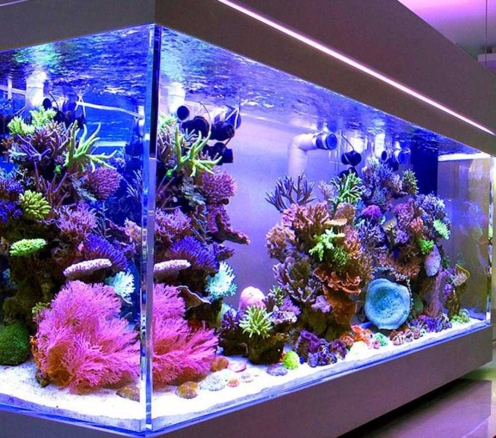 Какой размер аквариума выбрать?